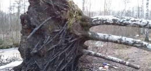 На крышу упало дерево