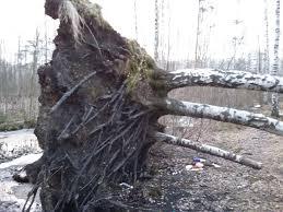 Упало дерево на дорогу