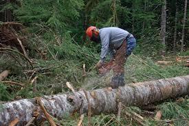 Самовольная вырубка деревьев