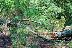 На девушку упало дерево