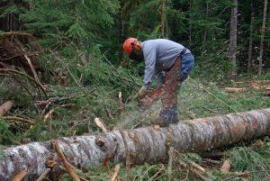 Экспертиза вырубки деревьев