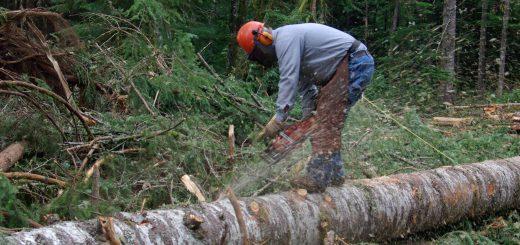Ответственность за вырубку деревьев