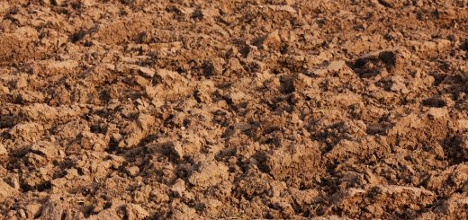 Очистка почвы от загрязнения