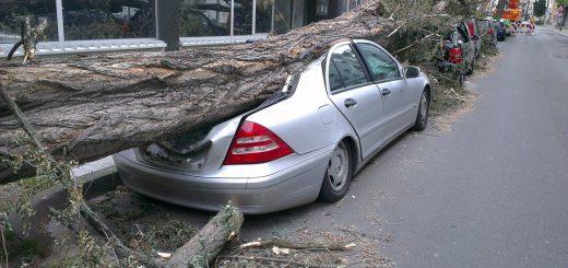 Падение дерева на машину