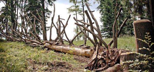 Упало дерево на женщину