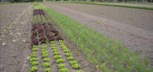 Экспертиза почвенная