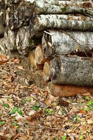 Вырубка деревьев - ответственность