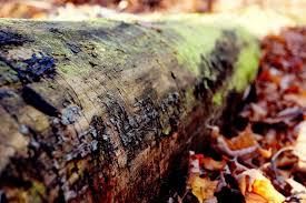 На девочку упало дерево