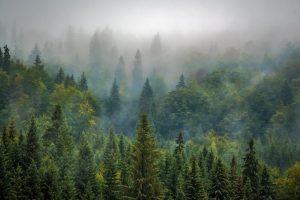 Сохранность лесных массивов