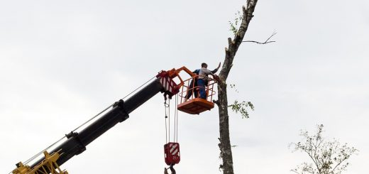 Незаконный выруб леса
