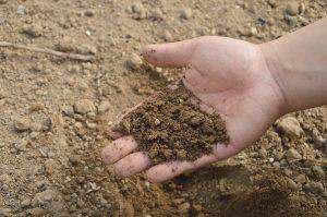 Виды загрязнения почвы