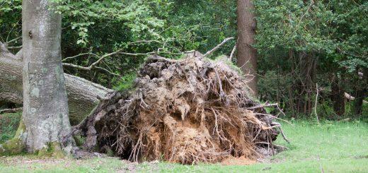 Ответственность за упавшее дерево