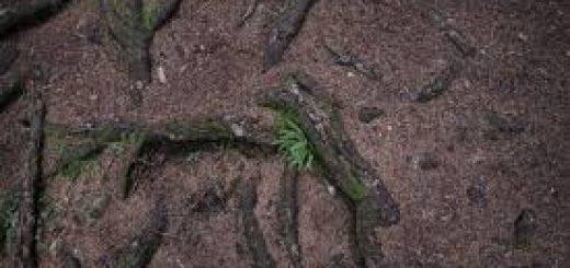 Оценка состояния почв
