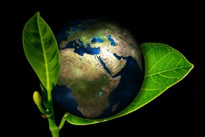 Экспертиза в экологии
