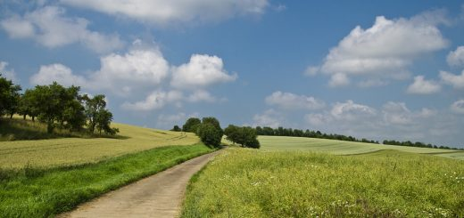 Агрономический анализ
