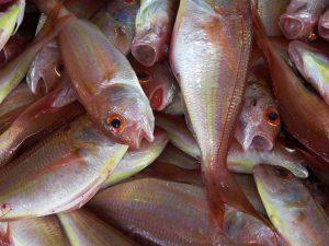 Оценка ущерба рыбным запасам