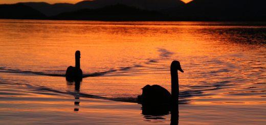 Экологическая экспертиза водных объектов