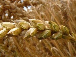 Агрономическое исследование