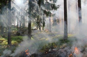 Расчет ущерба от лесного пожара