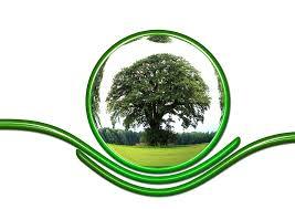 Экологический мониторинг ― цель и проведение