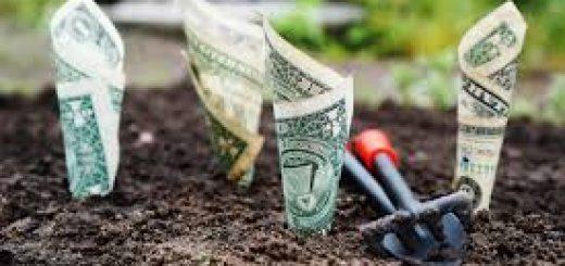 Сколько стоит анализ почвы