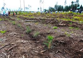 Методы мониторинга почв