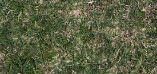 Химический анализ аллювиальной дерновой почвы