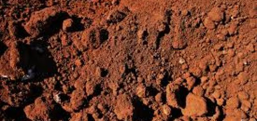 Берут анализ почвы