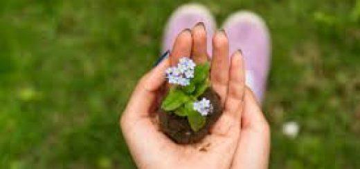 Исследование почвы на плодородие