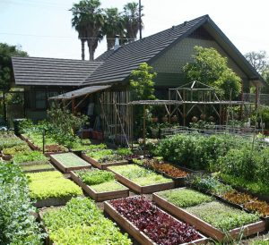 Анализ почвы в саду