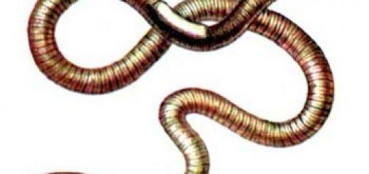 Исследование почвы гельминты