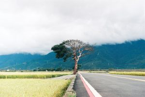 Анализ придорожной почвы