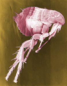 Протокол паразитологических исследований почвы