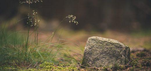 Мониторинг почвенного покрова