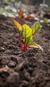 Морфологический анализ почв
