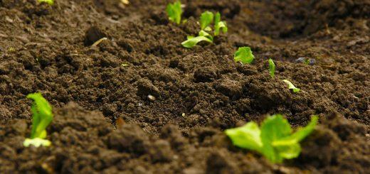 Мониторинг почв земель