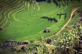 Мониторинг окружающей природной среды почвы