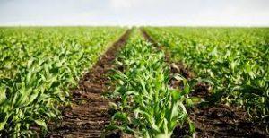 Экологическое состояние почвенного покрова
