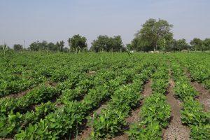 Мониторинг почвенного плодородия