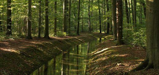 Экологический мониторинг воды