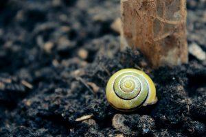 Основные экологические факторы почвенной среды