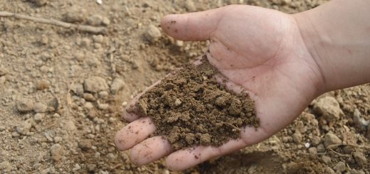 Яма для анализа почвы