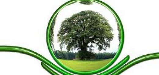Экологический мониторинг состояния окружающей среды