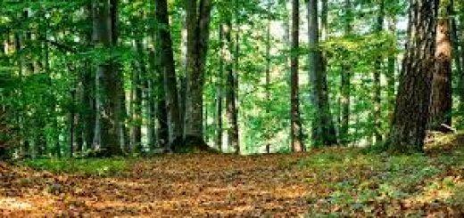 Мониторинг и охрана природных ресурсов