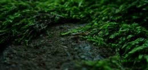Мониторинг лесных земель