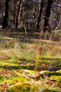Мониторинг лесной растительности