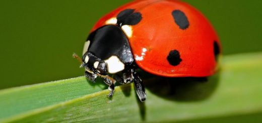 Мониторинг окружающей среды виды и алгоритм