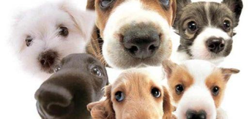 Новая система проведения мониторинга животных