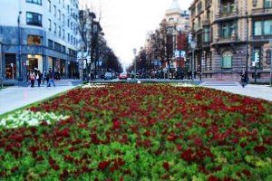 Актуальность мониторинга городских зеленых насаждений