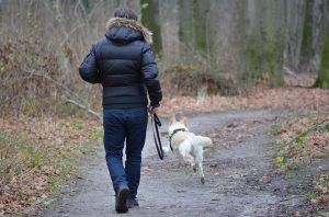 Мониторинг людей и животных